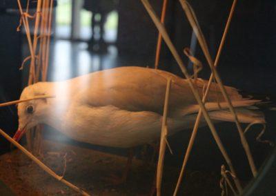 Ausgestopfte Möwe in der Ausstellung